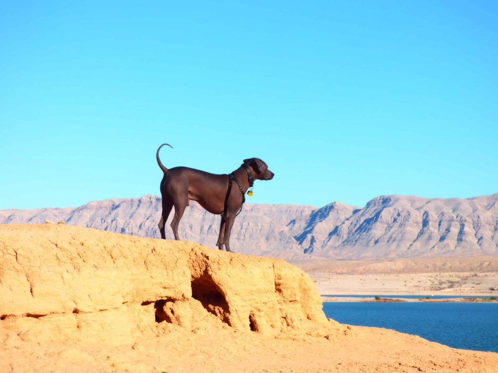 boondocking with dogs off leash